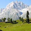 Amazing Sonmarg Tour